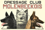 Dressage Club - Molenbeekois