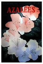 Azalees