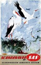SAS - Scandinavia (White Storks)