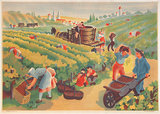 Les Vendanges Grape Harvest French Illustration (Horizontal)