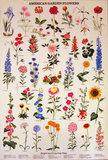 American Garden Flowers