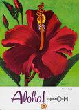 C & H - Hibiscus Aloha