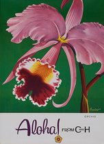 C & H - Orchid Aloha