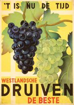 Westlandsche Druiven Grapes