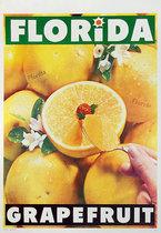 Florida Grapefruit