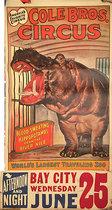 Cole Bros Circus Blood Sweating Hippopotamus