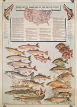Fresh Water Game Fish of the United States
