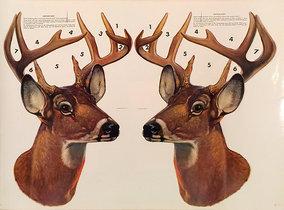 American Die Cut- Deer