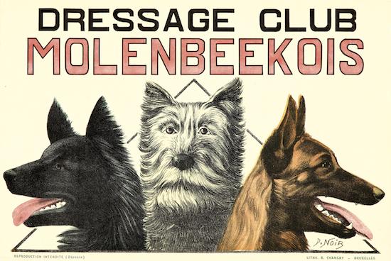 Dressage Club - Molenbeekois
