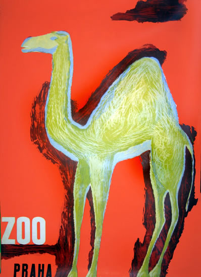 Zoo - Praha Camel