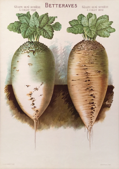 Betteraves (Turnips)