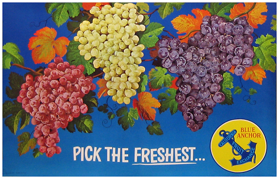 Pick the Freshest - Blue Anchor