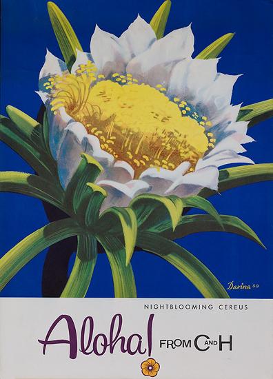 C & H - Nightblooming Cereus Aloha