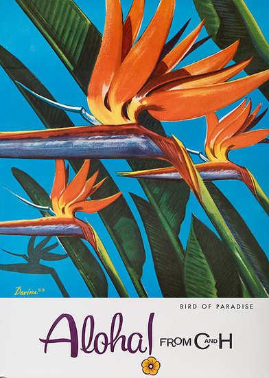 C & H Sugar Bird of Paradise Aloha