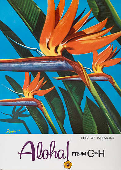 C & H Sugar Bird of Paradise Aloha