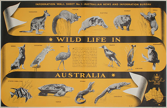 Wildlife in Australia
