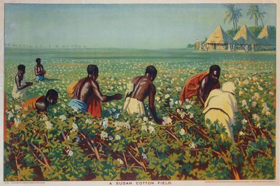 Empire Marketing Board- A Sudan Cotton Field