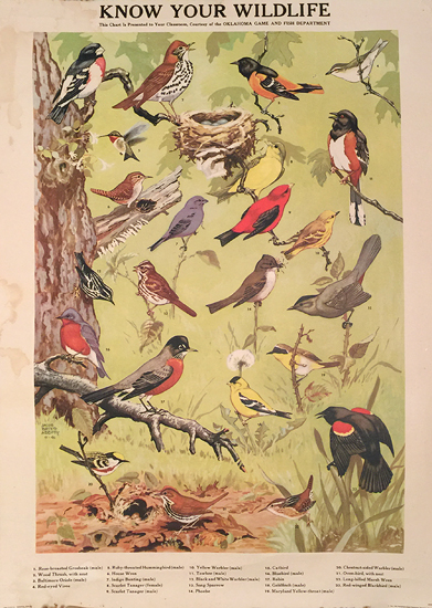 Know Your Wildlife (Songbirds and others)