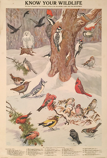 Know Your Wildlife (Winter Birds)